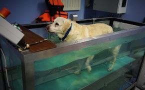 art. sposn.   Rehabilitacja to nie magia - to ciężka praca, żeby zwierzęta mogły cieszyć się pełnią zdrowia