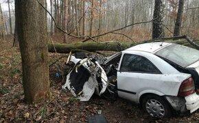 Samochód wypadł z drogi i uderzył w drzewo. Jedna osoba została przetransportowana do szpitala - Aktualności Podkarpacie