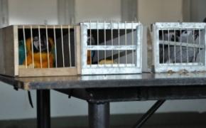 | Przemycał papugi chronione Konwencją Waszyngtońską