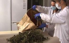 | Rzeszowscy policjanci zlikwidowali wytwórnię marihuany