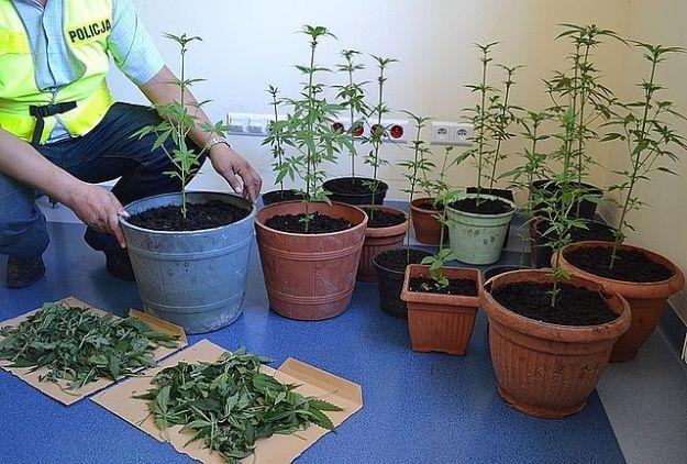 Aktualności Rzeszów | Wynajął mieszkanie do uprawy narkotyków