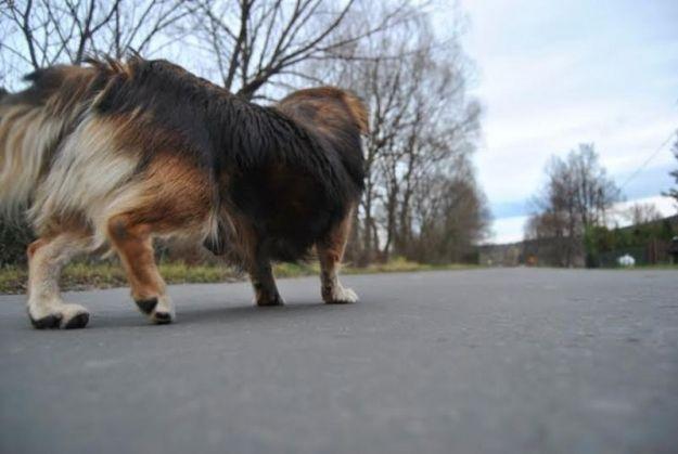 Aktualności Podkarpacie | 5-latka pogryziona przez psa przewieziona do Polanicy