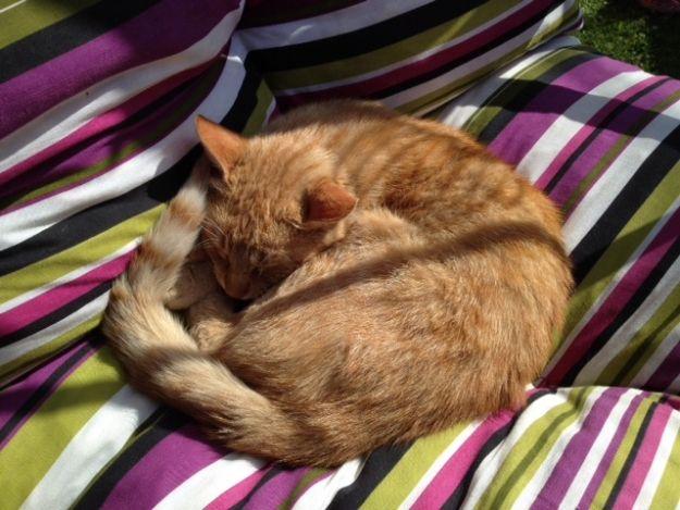 Aktualności Podkarpacie | Rzucił kotem w metalowy śmietnik. Zwierzę zmarło