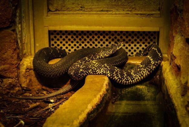 Aktualności Podkarpacie | Już wiadomo, jak anakonda dostała się na podkarpackie pola