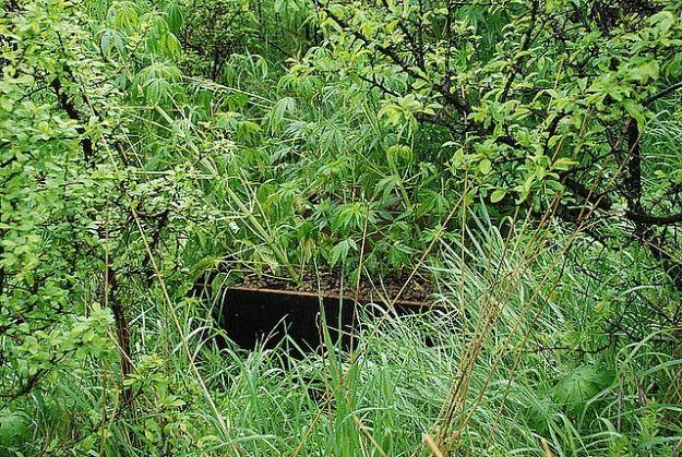 Aktualności Podkarpacie | Na leśnej polanie stworzyli plantację konopi