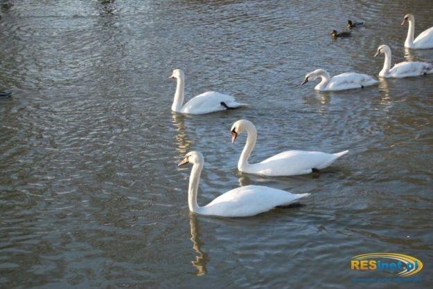 Aktualności Rzeszów | Ile ptaków w Rzeszowie?