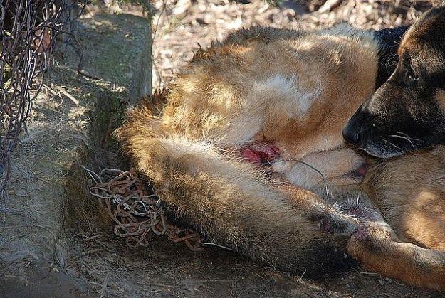 Aktualności Podkarpacie | Kto znęcał się nad psem? Policja poszukuje sprawcy