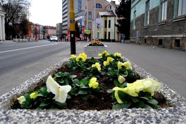 Aktualności Rzeszów | Ponad 100 tys. kwiatów ozdobi miasto. Zakończono I etap nasadzeń
