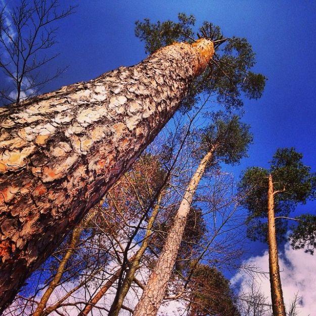 Aktualności Rzeszów | EkoPiknik z okazji Światowego Dnia Ziemi