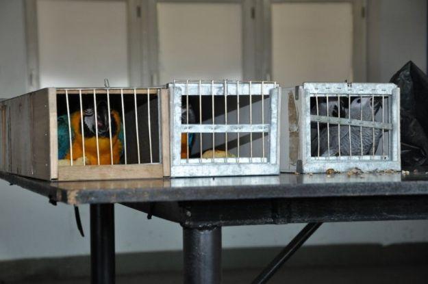Aktualności Podkarpacie | Przemycał papugi chronione Konwencją Waszyngtońską