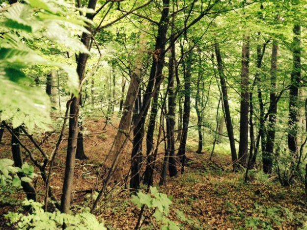 Aktualności Podkarpacie | Znaleźli bombę w lesie. Ważyła ponad pół tony!
