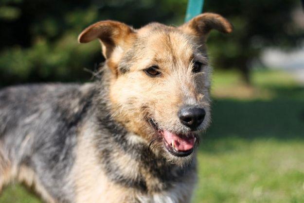 Aktualności Rzeszów | Bezdomnym zwierzakom z Rzeszowa możesz pomóc przez internet