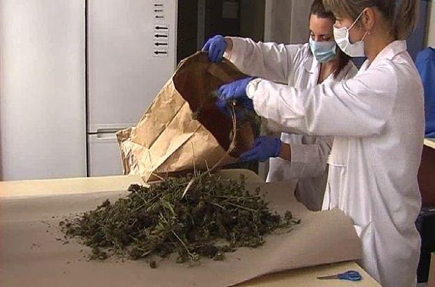Aktualności Rzeszów | Rzeszowscy policjanci zlikwidowali wytwórnię marihuany