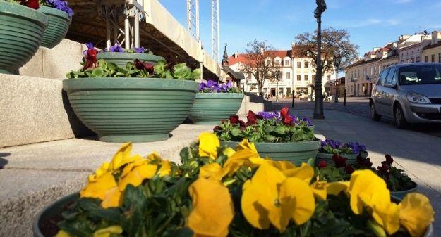 Aktualności Rzeszów | Rzeszów zostanie ozdobiony nasadzeniami. Gdzie pojawi się dekoracyjna roślinność?