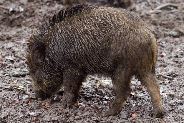 Aktualności Podkarpacie | Kolizje z dzikimi zwierzętami. Policja apeluje o ostrożność