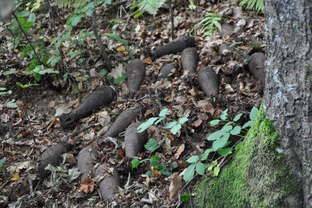 Aktualności Podkarpacie | W Bieszczadach znaleziono ponad 20 pocisków z II wojny światowej