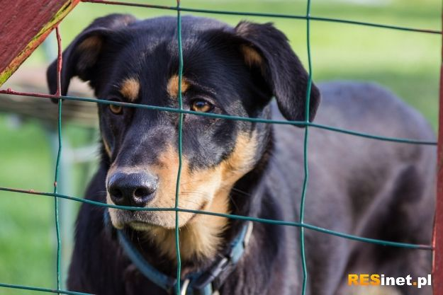 Aktualności Rzeszów | Bezdomne zwierzęta z rzeszowskiego schroniska dostaną nowe domy. Jest chętny wykonać remont