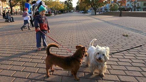 Aktualności Podkarpacie | Dzieci w psich odchodach