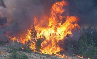 Aktualności Podkarpacie | Wzrasta zagrożenie pożarami w podkarpackich lasach