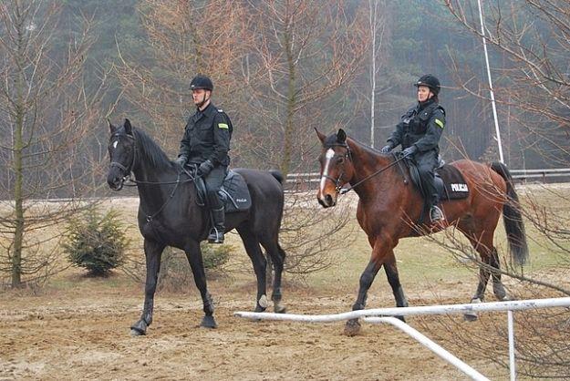 Aktualności Rzeszów | Patrol konny zatrzymał złodziei drewna
