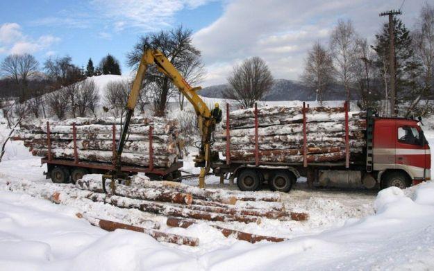 Aktualności Podkarpacie | Rośnie pozyskanie drewna w podkarpackich lasach