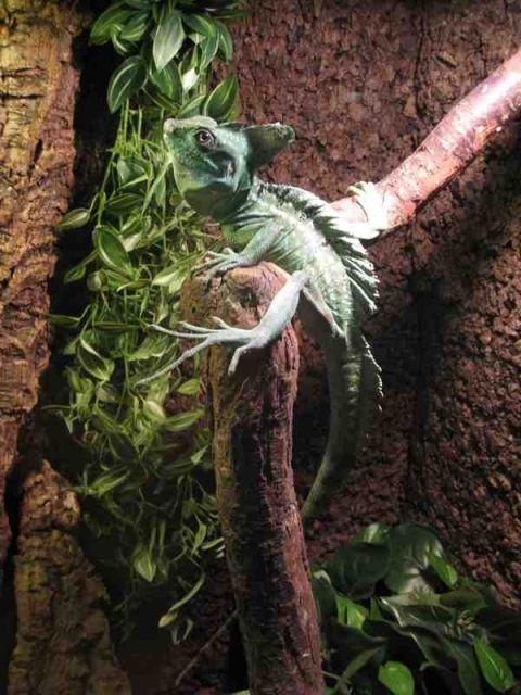 Aktualności Rzeszów | Egzotyczne zwierzęta z bliska