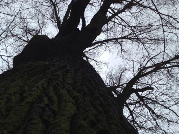 Aktualności Podkarpacie | Śmiertelnie przygnieciony przez drzewo