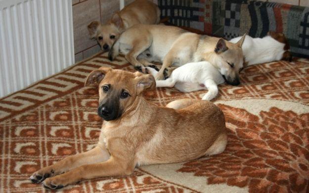 Aktualności Rzeszów | Wakacje mogą być okrutne dla zwierząt