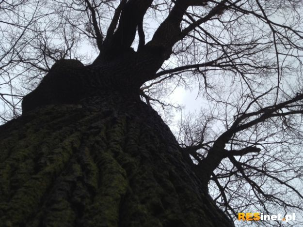Aktualności Podkarpacie | Śmiertelny upadek z drzewa