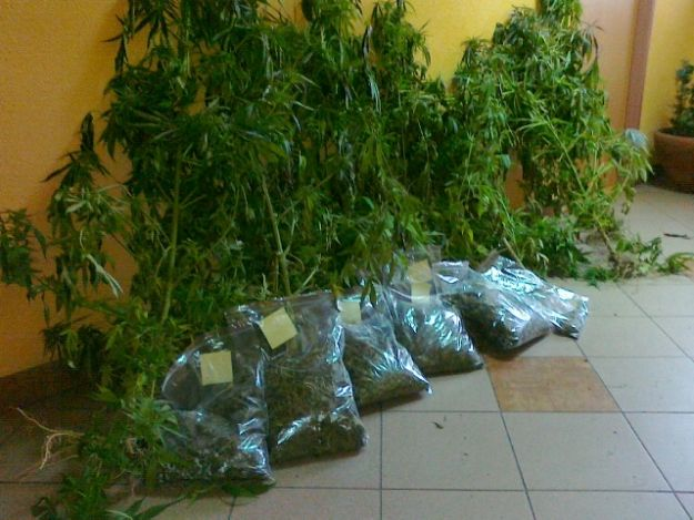 Aktualności Podkarpacie | Policjanci skonfiskowali 3,5 kilograma konopii