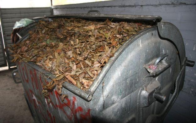 Aktualności Rzeszów | Nie pal liści, których nie zabrała śmieciarka