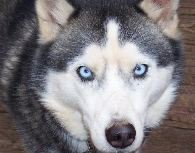 Aktualności Podkarpacie | Psy które pogryzły 6-latkę zostały uśpione