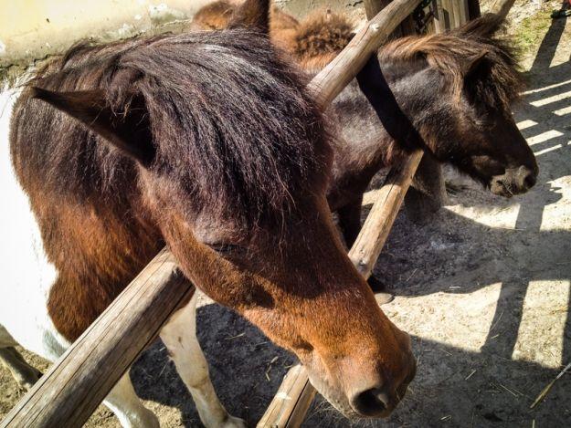 Aktualności Rzeszów | Samochód zderzył się z koniem. Zwierzę zmarło