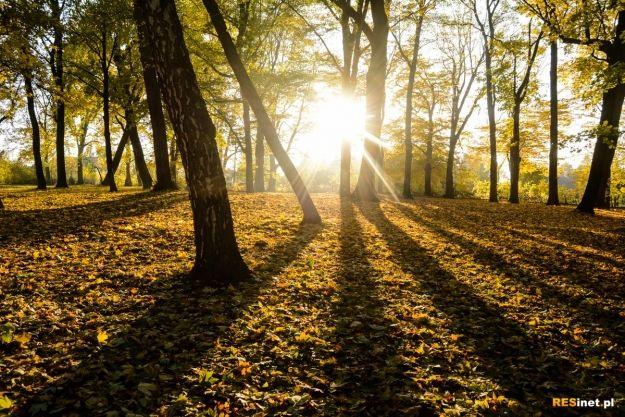 FOTO. Barwy jesieni. Klimatyczne kadry ze spaceru po Rzeszowie