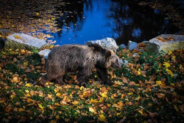 Jest szansa na stworzenie zoo - Aktualności Rzeszów