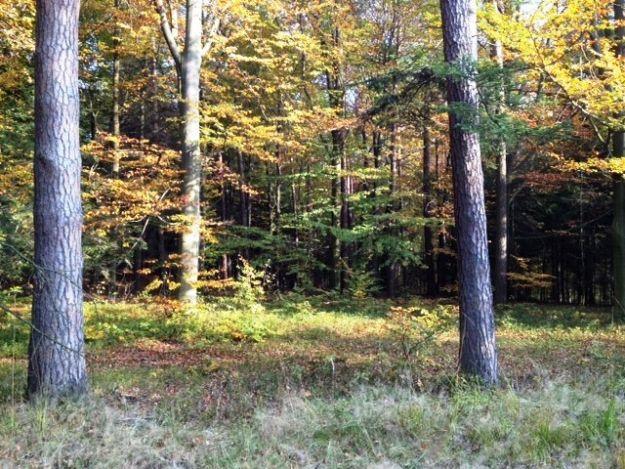 Znaleźli ludzkie kości w lesie - Aktualności Podkarpacie