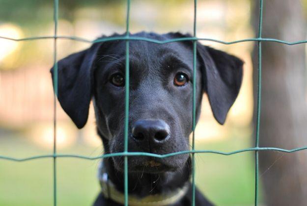 Zbiórka karmy dla bezdomnych zwierząt - Aktualności Rzeszów