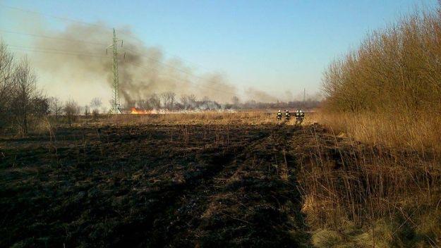 VIDEO. Plaga pożarów traw w Rzeszowie i okolicach - Aktualności Rzeszów