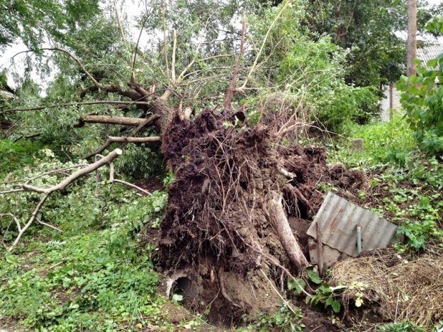 Wyłamane drzewa, zniszczone dachy i zalane piwnice. Skutki wczorajszych nawałnic - Aktualności Podkarpacie