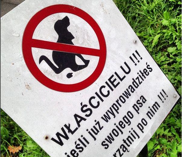 Nie sprzątasz po swoim psie? Łamiesz prawo - Aktualności Rzeszów