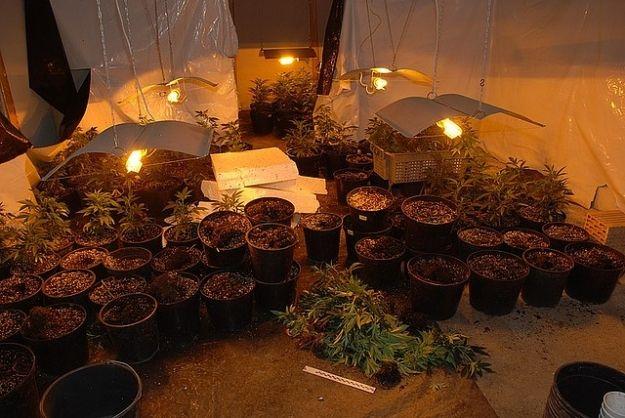 """Kolejna """"plantacja"""" konopi na Podkarpaciu. Zbudował dom dla nielegalnych upraw - Aktualności Podkarpacie"""