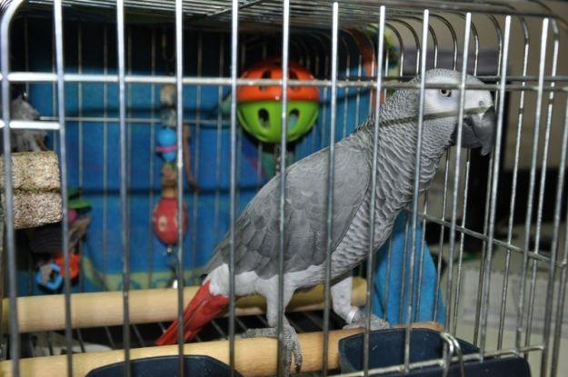 Próba wywiezienia chronionego gatunku papugi. Ptak trafił do zoo - Aktualności Podkarpacie