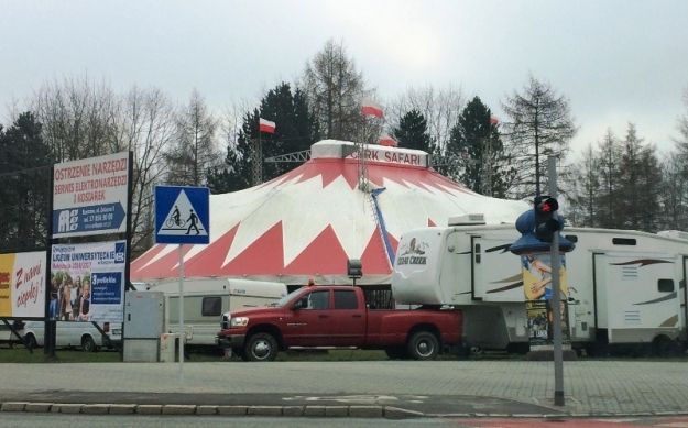 Naprzeciwko Stadionu Miejskiego stanął cyrkowy namiot - Aktualności Rzeszów