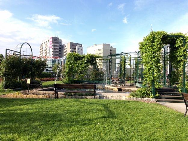 Rzeszów z najpiękniejszą zielenią miejską? Można oddawać głosy na nasze miasto - Aktualności Rzeszów