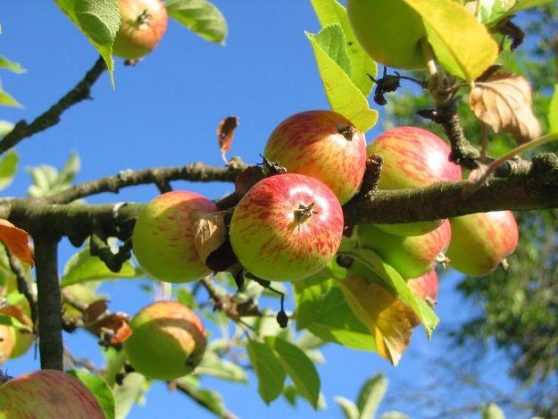 RBO 2017: Edukacyjny sad owocowy. Ciekawa inwestycja w przyszłorocznym budżecie - Aktualności Rzeszów