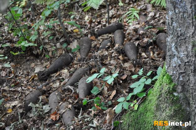 W Bieszczadach znaleziono ponad 20 pocisków z II wojny światowej  - Aktualności Podkarpacie