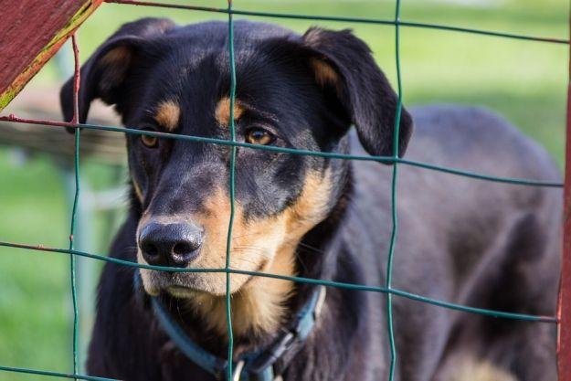 Bezdomne zwierzęta z rzeszowskiego schroniska dostaną nowe domy. Jest chętny wykonać remont - Aktualności Rzeszów