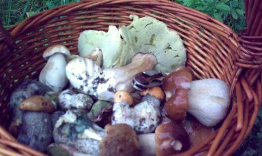 Są już grzyby w podkarpackich lasach - Aktualności Podkarpacie