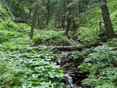Przyrodniczy szlak Puszczy Sandomierskiej otwarty  - Aktualności Podkarpacie