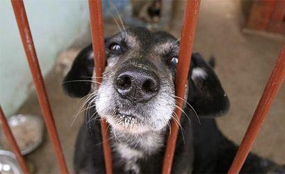 Kto zmierzy psom łańcuchy? Kolejny martwy przepis? - Aktualności Rzeszów